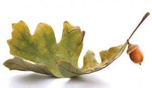 oak-leaf-acorn-whitelaw-compliance-group-2